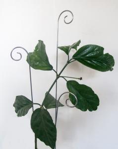 Spiry blompinne no 2 obeh metall - 3 pack köp hos Plantanica