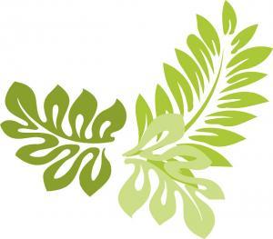 Stewartia pseudocamellia - Skenkamelia - frö köp hos Plantanica
