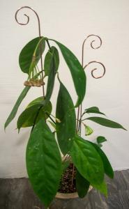 Spiry blompinne no 3 koppar färgad metall - 3 pack köp hos Plantanica