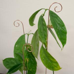 Spiry blompinne no 2 koppar färgad metall - 3 pack köp hos Plantanica