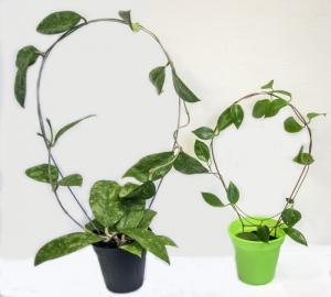 Spalje Båge Enkel Stor rostfri 50 cm köp hos Plantanica